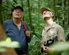 """""""Poumon vert et tapis rouge"""", de la forêt amazonienne à Hollywood"""