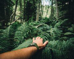 Protection des forêts : place à la décennie de l'action