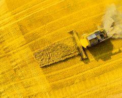 Nouveaux OGM: de quoi s'agit-il?
