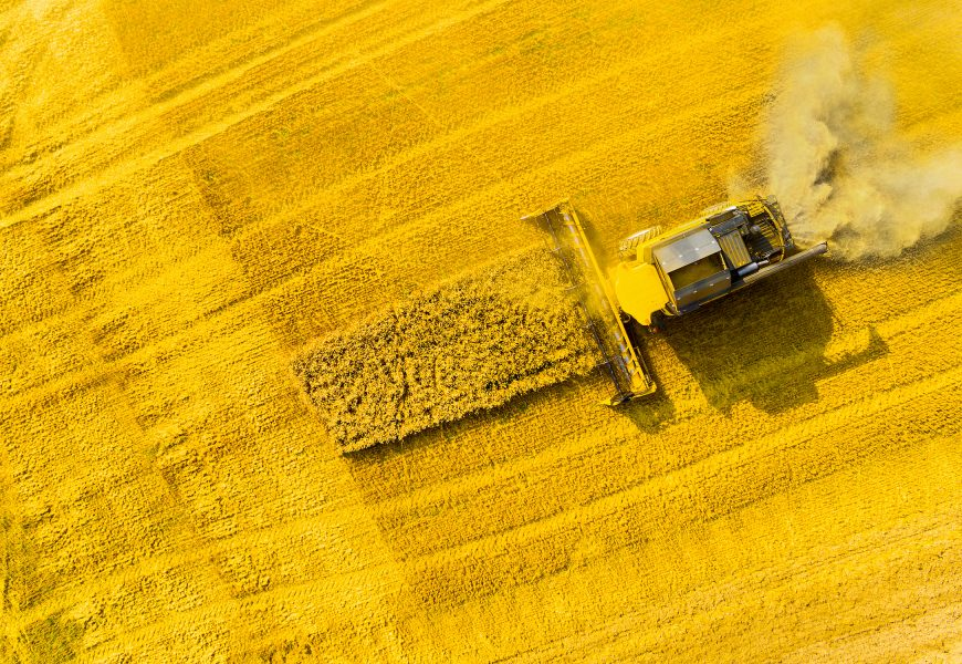 Nouveaux OGM