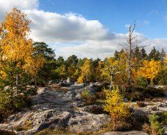 La forêt de Fontainebleau, première ZAD du monde