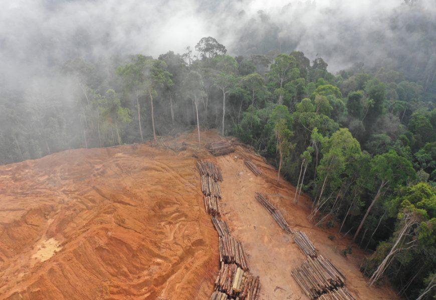 Le Jour du dépassement intervient plus tôt cette année notamment du fait d'un pic de déforestation.