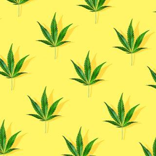 Contre la douleur, du cannabis plutôt que du paracétamol !