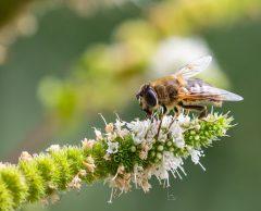 La protection de la biodiversité, un bon pari économique