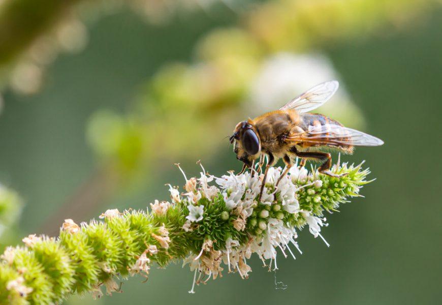 biodiversité, abeilles