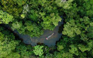 À la chasse aux médicaments du futur en Amazonie