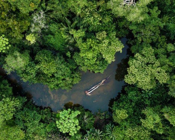 Amazonie : À la chasse aux médicaments du futur