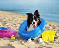 Garde de chien ou chat pendant les vacances : des solutions contre l'abandon