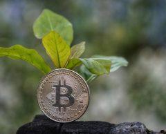 Bitcoin vs écologie : et si un Carbon coin sauvait le climat ?