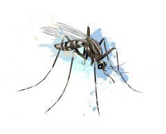 Le moustique, pire tueur en série de l'histoire