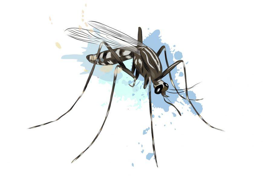 Moustique tueur