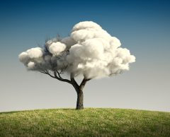 Faut-il donner des droits aux arbres ?