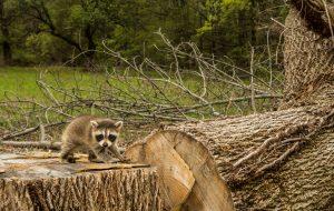 Faut-il donner un prix à la nature ? Les risques de la finance verte