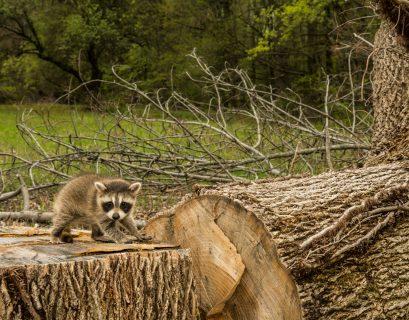 Les Verts du Parlement Européen pointent les risques de donner un prix à la nature.