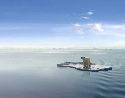 Un ours blanc sur une banquise qui disparaît