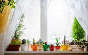 Jardinage confiné : comment cultiver légumes et fleurs sans jardin
