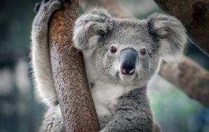 Biodiversité : pourquoi la COP15 est cruciale ?